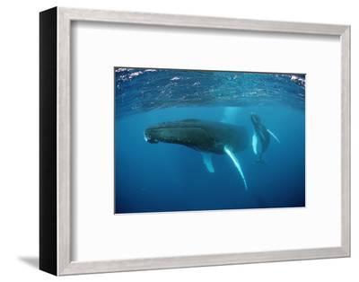 Humpback Whale-Reinhard Dirscherl-Framed Photographic Print