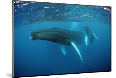 Humpback Whale-Reinhard Dirscherl-Mounted Photographic Print