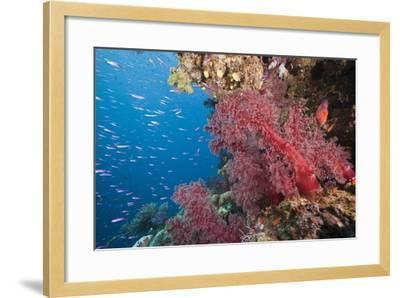 Fiji Coral Reef-Reinhard Dirscherl-Framed Photographic Print