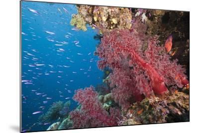 Fiji Coral Reef-Reinhard Dirscherl-Mounted Photographic Print