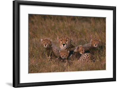 Cheetah with Cubs in Grass-DLILLC-Framed Photographic Print