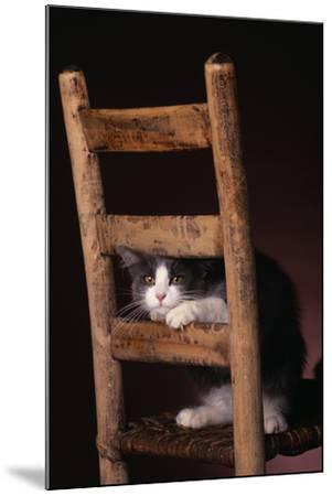 Gray and White Cat Looking through Wood Chair-DLILLC-Mounted Photographic Print