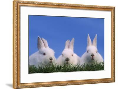 Domestic Rabbits in Grass-DLILLC-Framed Photographic Print