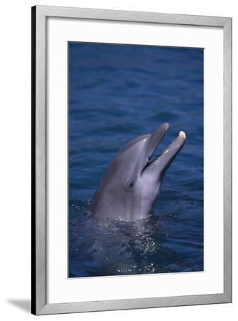 Bottlenosed Dolphin-DLILLC-Framed Photographic Print