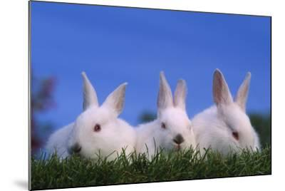 Domestic Rabbits in Grass-DLILLC-Mounted Photographic Print