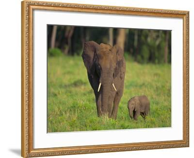 African Elephant and Calf in Grass-DLILLC-Framed Photographic Print