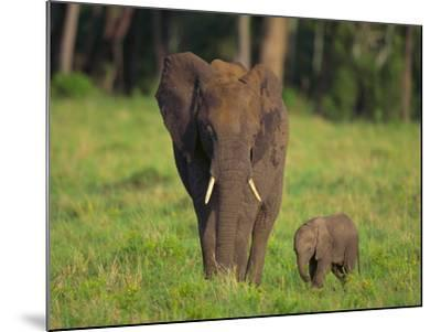 African Elephant and Calf in Grass-DLILLC-Mounted Photographic Print