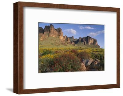 Wildflowers and Cliffs in Desert-DLILLC-Framed Photographic Print