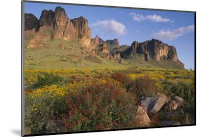 Wildflowers and Cliffs in Desert-DLILLC-Mounted Photographic Print