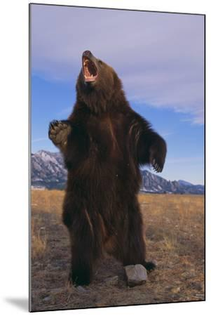Roaring Grizzly Bear-DLILLC-Mounted Photographic Print
