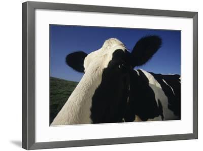 Holstein-DLILLC-Framed Photographic Print