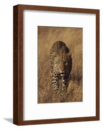 Leopard-DLILLC-Framed Photographic Print