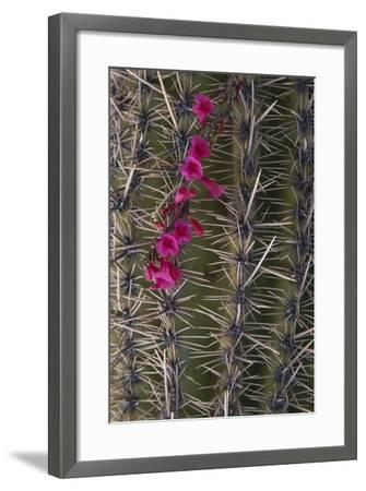 Flowers on Cactus-DLILLC-Framed Photographic Print