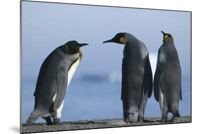 King Penguins on Rocky Beach-DLILLC-Mounted Photographic Print