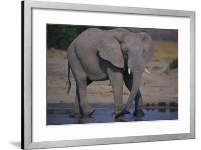 African Elephant at Watering Hole-DLILLC-Framed Photographic Print