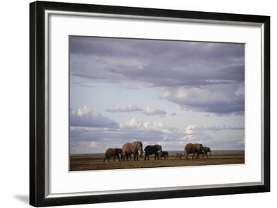 Elephant Family-DLILLC-Framed Photographic Print