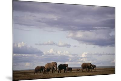 Elephant Family-DLILLC-Mounted Photographic Print