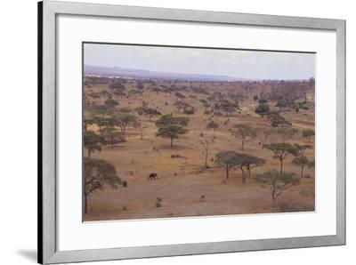 African Elephant Walking in Savanna-DLILLC-Framed Photographic Print