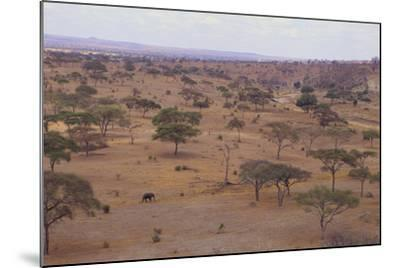 African Elephant Walking in Savanna-DLILLC-Mounted Photographic Print