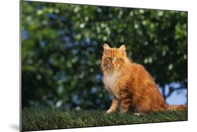 Yellow Cat on Grass-DLILLC-Mounted Photographic Print