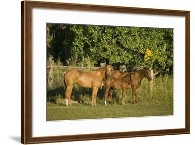 Three Quarter Horses Together in the Pasture-DLILLC-Framed Photographic Print