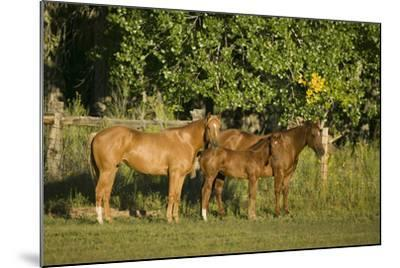 Three Quarter Horses Together in the Pasture-DLILLC-Mounted Photographic Print