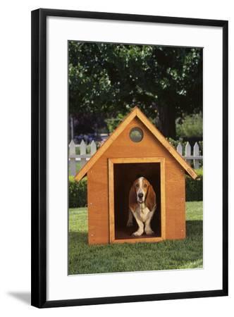 Beagle-DLILLC-Framed Photographic Print