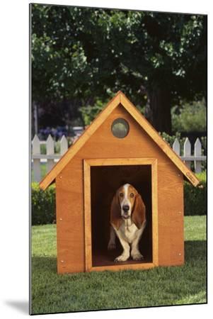 Beagle-DLILLC-Mounted Photographic Print