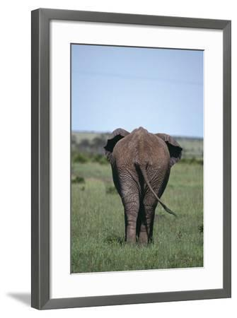 Elephant-DLILLC-Framed Photographic Print
