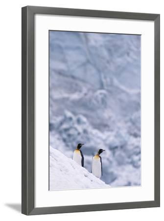 King Penguins Climbing Snow Hill-DLILLC-Framed Photographic Print