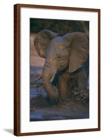 African Elephant Calf Bathing in Watering Hole-DLILLC-Framed Photographic Print