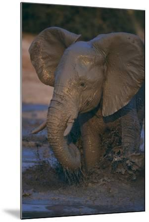 African Elephant Calf Bathing in Watering Hole-DLILLC-Mounted Photographic Print
