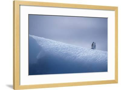 Chinstrap Penguins Standing on Ice-DLILLC-Framed Photographic Print