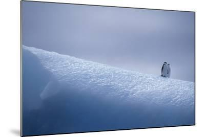 Chinstrap Penguins Standing on Ice-DLILLC-Mounted Photographic Print