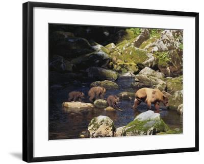 Brown Bear and Cubs-DLILLC-Framed Photographic Print