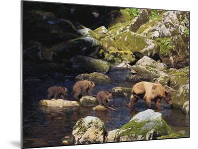 Brown Bear and Cubs-DLILLC-Mounted Photographic Print