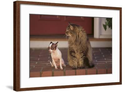 Nervous Chihuahua Sitting beside a Cat-DLILLC-Framed Photographic Print