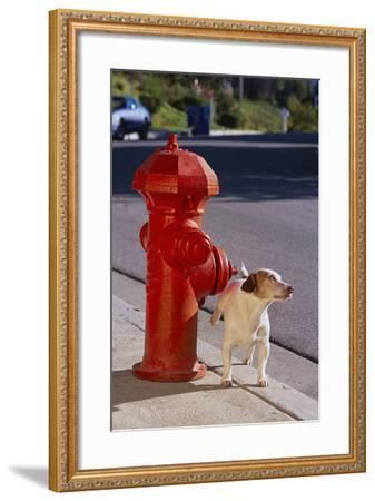 Jack Russell Terrier-DLILLC-Framed Photographic Print