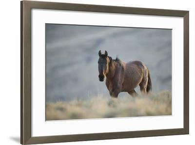 Gaunt Wild Horse on the Range-DLILLC-Framed Photographic Print