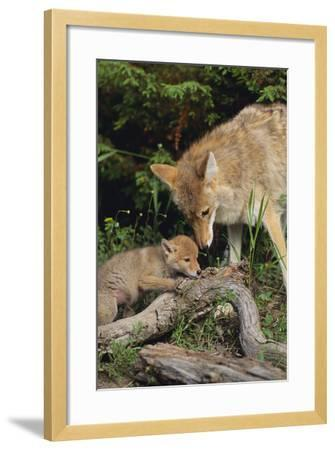 Coyote and Her Pup-DLILLC-Framed Photographic Print