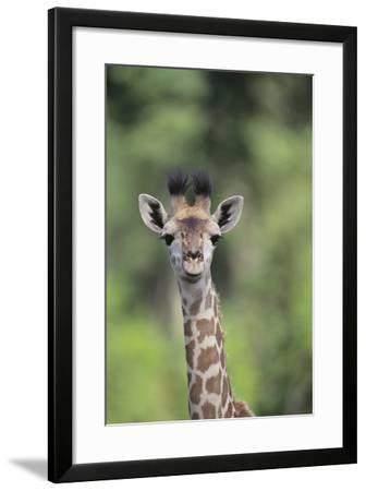 Giraffe-DLILLC-Framed Photographic Print