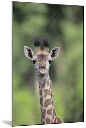 Giraffe-DLILLC-Mounted Photographic Print