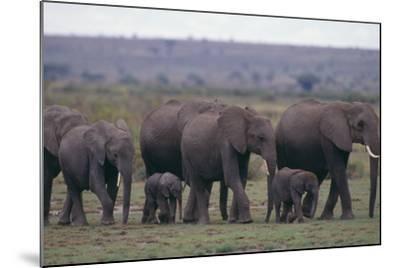 Elephants-DLILLC-Mounted Photographic Print