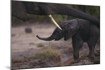 Mother Elephant Encouraging Baby-DLILLC-Mounted Photographic Print