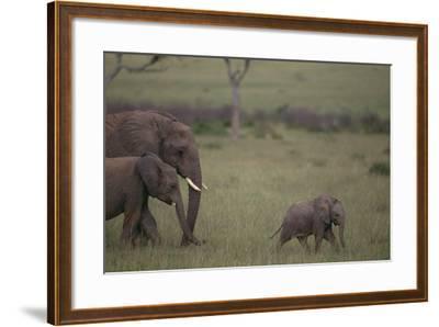 Baby Elephant Taking the Lead-DLILLC-Framed Photographic Print