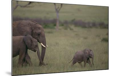 Baby Elephant Taking the Lead-DLILLC-Mounted Photographic Print