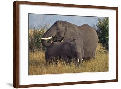 Adult and Young Elephant-DLILLC-Framed Photographic Print