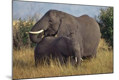 Adult and Young Elephant-DLILLC-Mounted Photographic Print