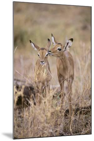 Young Impala Friends Nuzzling-DLILLC-Mounted Photographic Print