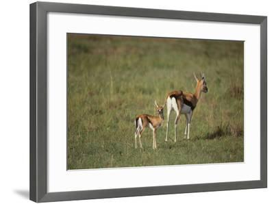 Thomson's Gazelle and Young-DLILLC-Framed Photographic Print